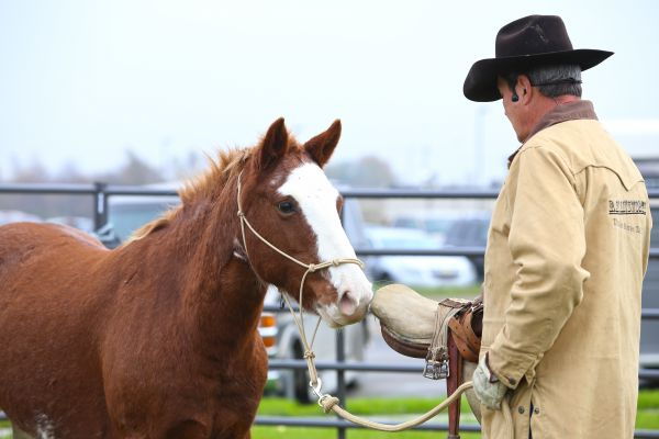 2014 ray ainsworth introduces saddle to mustang first time